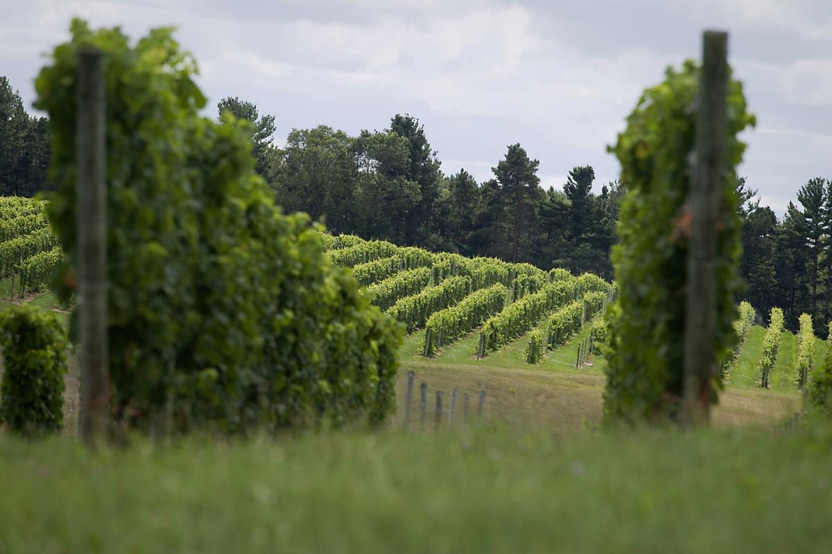 Shady Lane vineyard