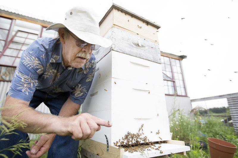 Swarming Bees Build Buzz | Local News | record-eagle com