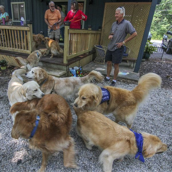 Golden Mine: Retriever Club Draws Owners, Pups