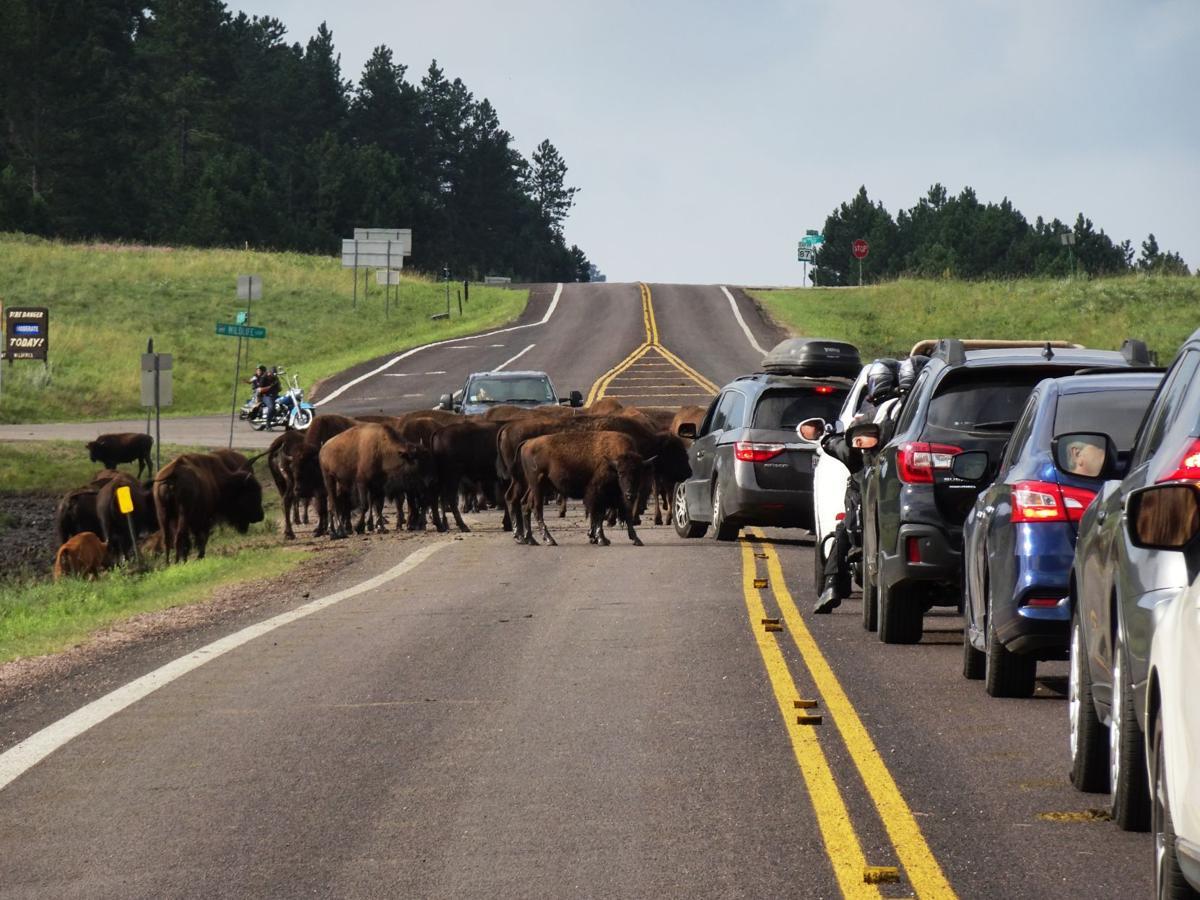 On the Trail: South Dakota's Black Hills, Badlands an