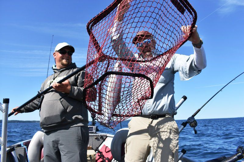 Bob Gwizdz: Call it cisco or lake herring, fish makes excellent eating