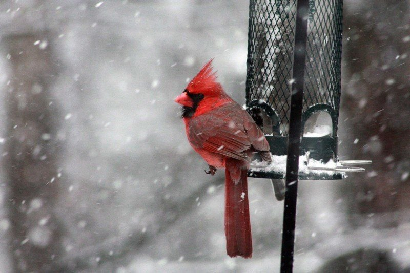Chris Smith: Northern nature: How birds handle the cold