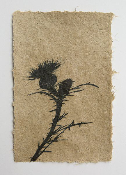Paperworks Studio artists craft paper from invasive plants