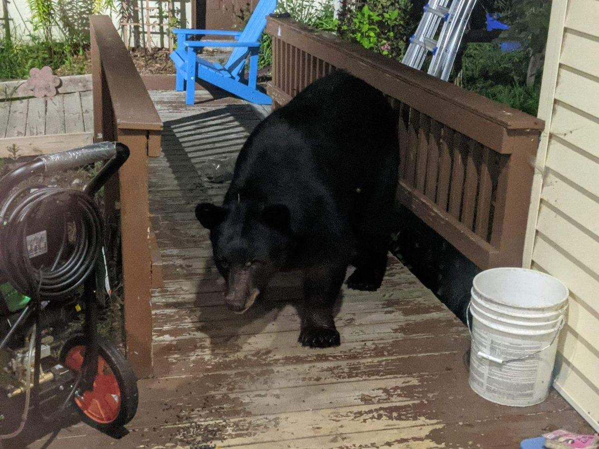 Bear on porch submitted photo