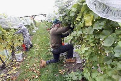 Benchmark program takes aim at wineries