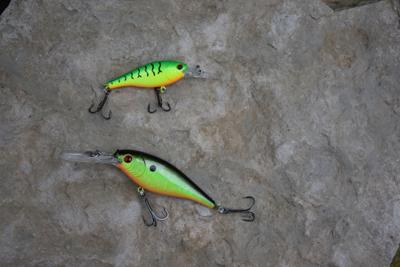 flicker shad (1).jpg