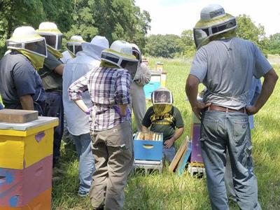 Veterans try beekeeping