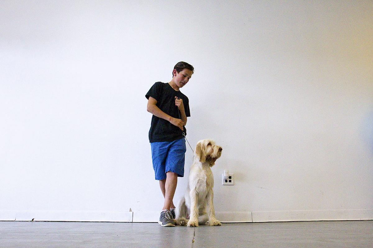 Dog Training Traverse City
