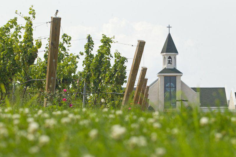 Parishioners tend vineyards for sacramental, 'Holy Family' wine