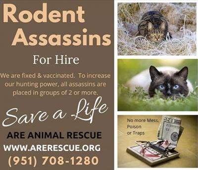 ARE Rescue