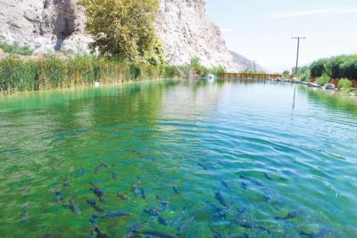 Fish jumping at Whitewater