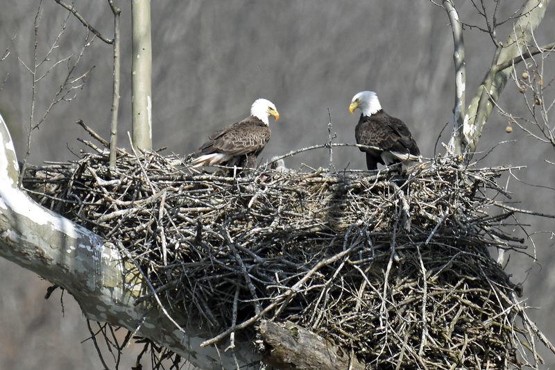 Eagle Brigade keeps eyes on southern West Virginia raptors