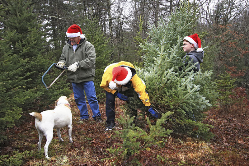 Something to carry on Christmas tree farm has become a family tradition