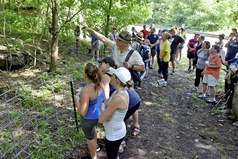 Locals venture into Thurmond for 2nd annual Goat Walk | News