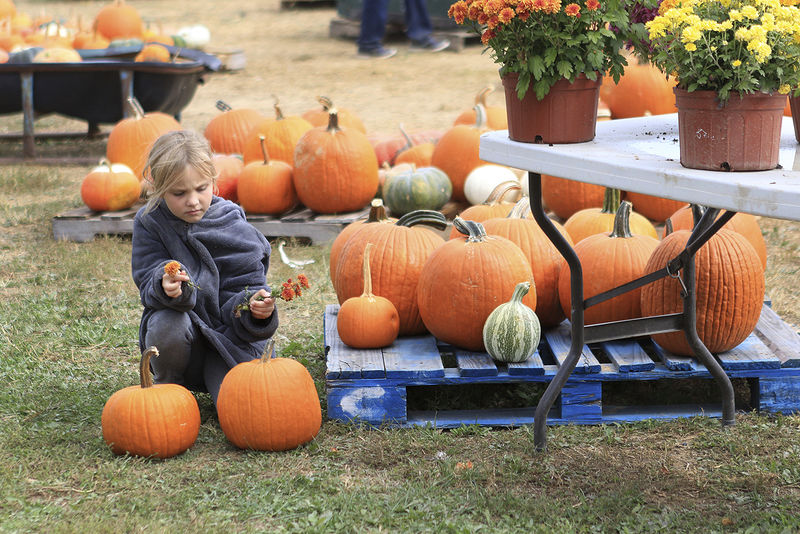 Autumn farm activities grew from birthday parties
