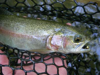 Trout stocking season is now under way | Sports | register