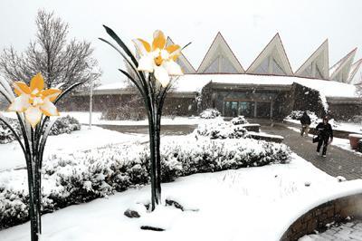 Tamarack snow