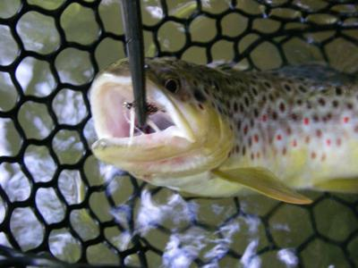 Monongahela National Forest provides boundless angling opportunities