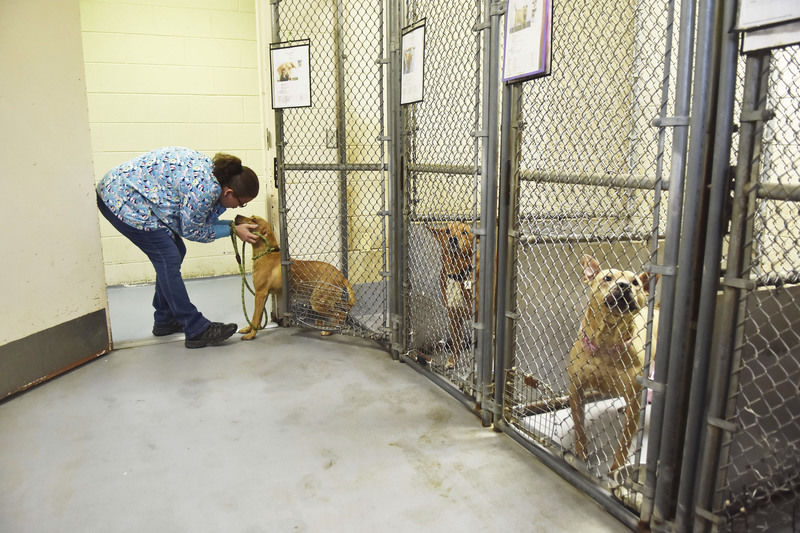 Humane Society of Raleigh County facing dire financial crisis
