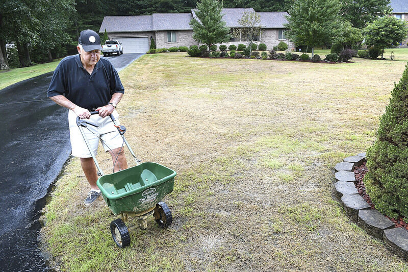 Armyworms invading local lawns