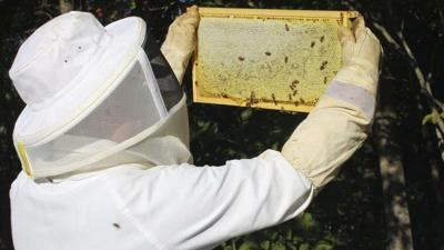 Raleigh County Beekeeping Cooperative Association educates future beekeepers