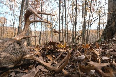Hunting is needed to keep the balance of conservation in check