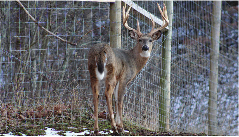 Big Bucks West Virginia Deer Farm Industry Growing News