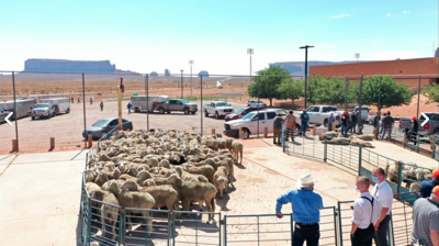 Church Participates in Sheep Donation on Navajo Reservation