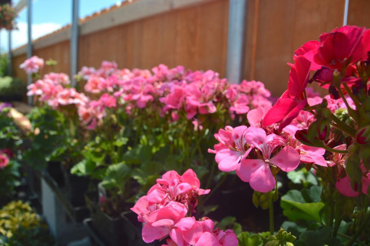 flower petalers 02