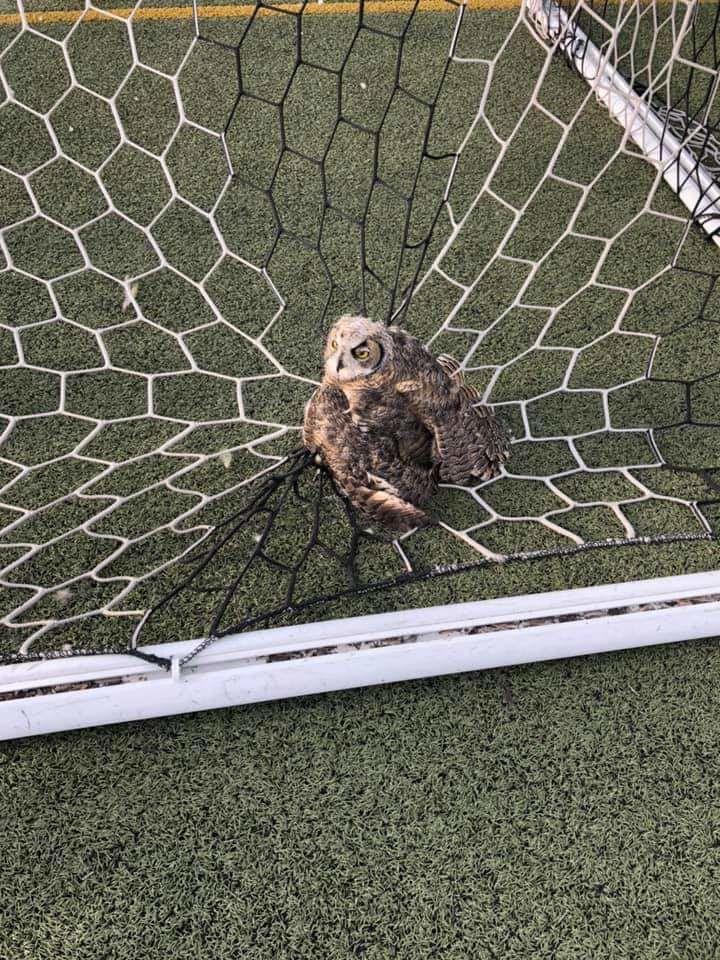 owl net