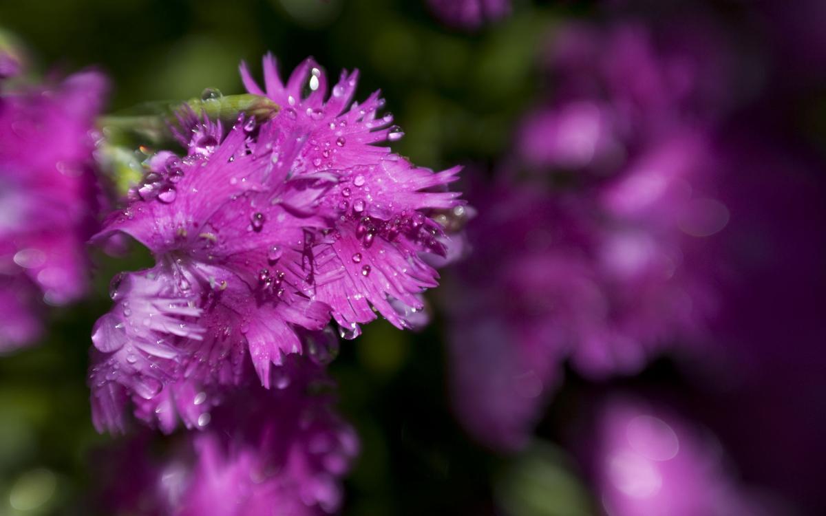 BYU-Idaho Gardens Summertime