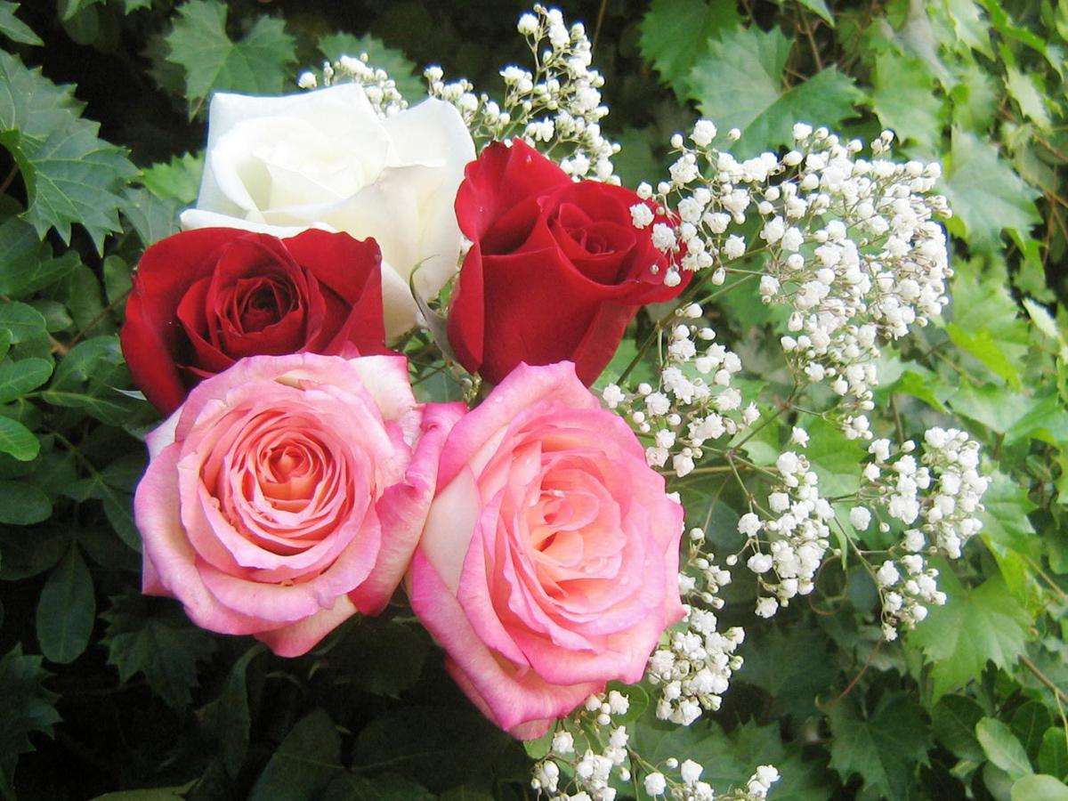 Valentine flowers the language of love columns valentine flowers the language of love dhlflorist Image collections