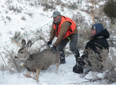 Mule deer fawns survival rate below average after cruel winter