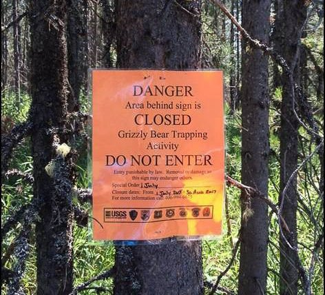 Biologists to begin grizzly bear research trapping in the Caribou-Targhee National Forest