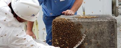 Bees at Watts Bar