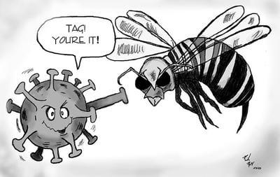 5.9 hornets