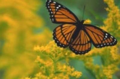 How To Build A Butterfly Garden Community Richmondregister Com