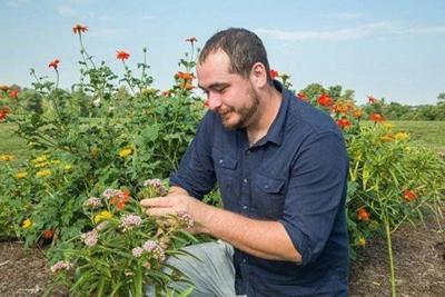 UK research shows how to build more effective monarch butterfly gardens
