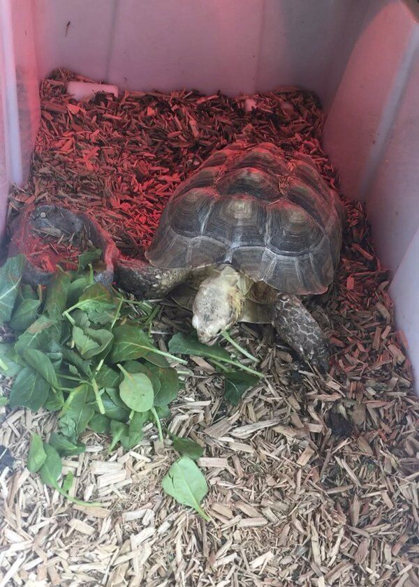 The Tortoise and the Scare