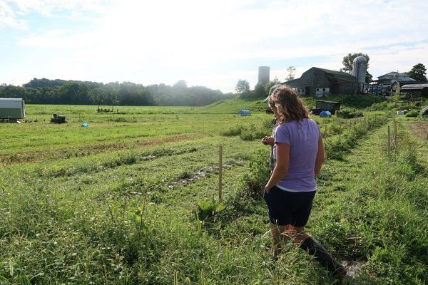 The future of food: Ky. farm looks to keep ag all local