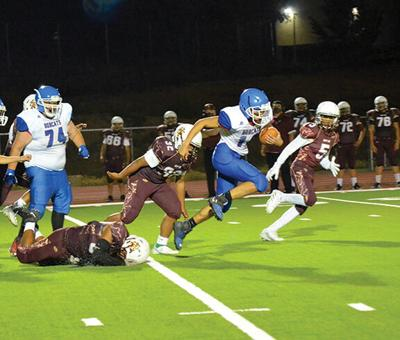 Bobcats Hold Their Ground