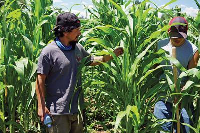 Sostenga Grows to Meet Local Food Demand