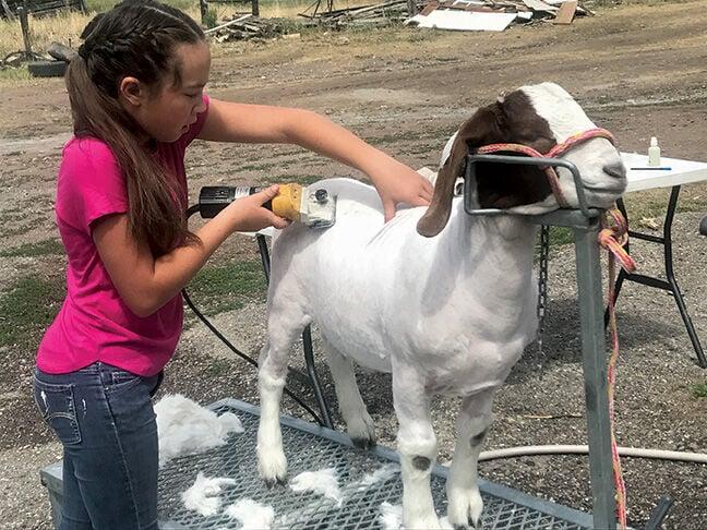 Gurule with goat