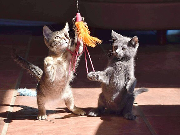 Kittens versus yarn