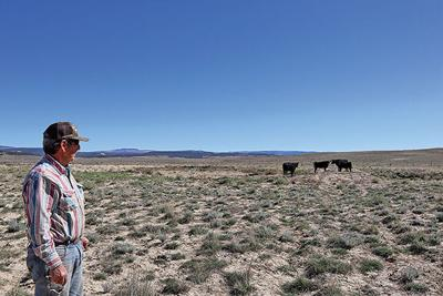 Hebner and his cows