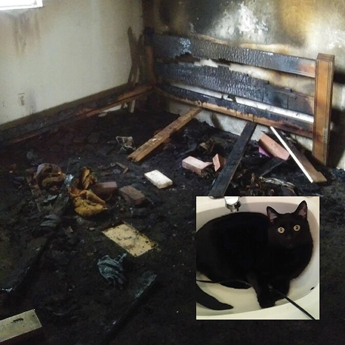 Cat inset on burned house