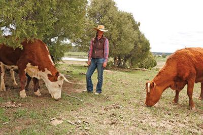 Sage Faulkner with cattle