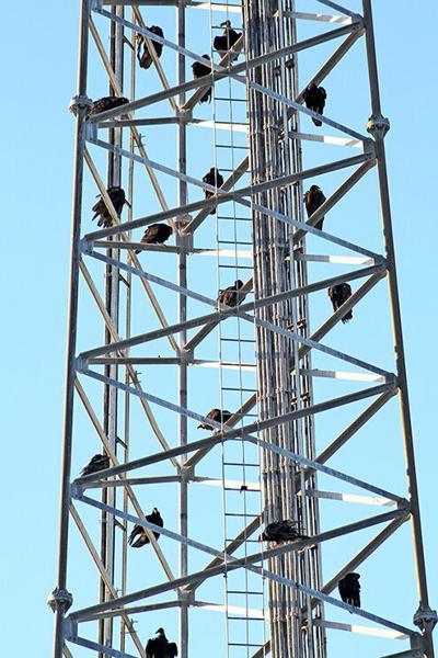 Buzzard tower