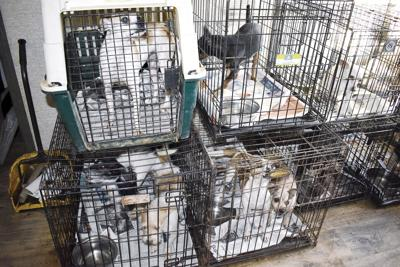 Sheriff, SPCA seize dozens of animals from Nevada home