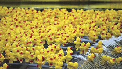 Virtual duck pluck